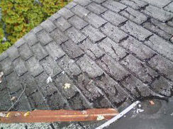 Rubber Roof Services